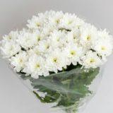 Упаковка кустовых хризантем - микс